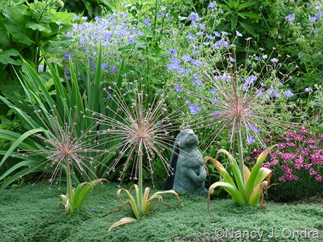 Allium schubertii with Thymus pseudolanuginosus and Geranium 'Brookside'