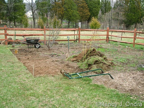 Perennial meadow in progress mid-April 2011