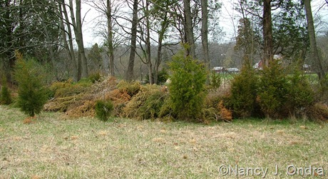 Brush pile in upper meadow early April 2011