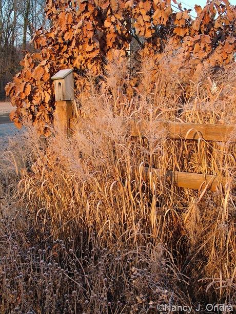 Garden Designers Roundtable: Top Landscape Plants | Hayefield