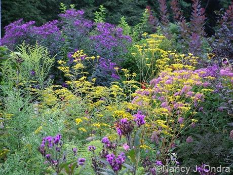Vernonia, Patrinia scabiosifolia, Solidago rugosa 'Fireworks', and Eutrochium maculatum late August 09