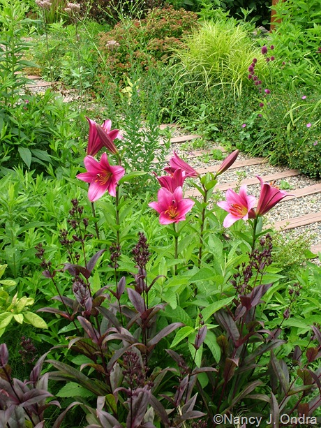 Lilium 'Purple Prince' and Penstemon 'Dark Towers' June 28 2011