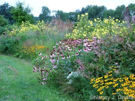 Echinacea purpurea with Rudbeckia fulgida var. fulgida and Helianthus 'Lemon Queen' Aug 29 09