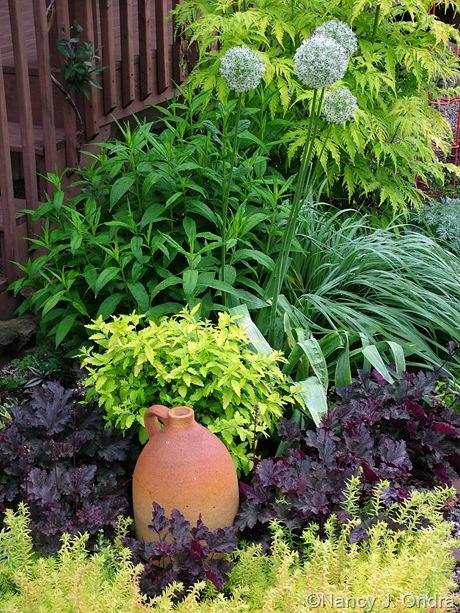 Allium 'Mount Everest' with Molinia caerulea 'Bergfreund', Phlox, Caryopteris incana 'Jason' (Summer Sunshine), Heuchera 'Plum Pudding', and Sedum 'Angelina' May 28 2007