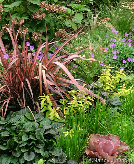 Phormium 'Pink Stripe' with Ajuga 'Catlin's Giant', Echeveria 'The Rose', Allium cernuum,  Hypericum 'Brigadoon' and Geranium 'Gerwat' (Rozanne) Aug 27 09
