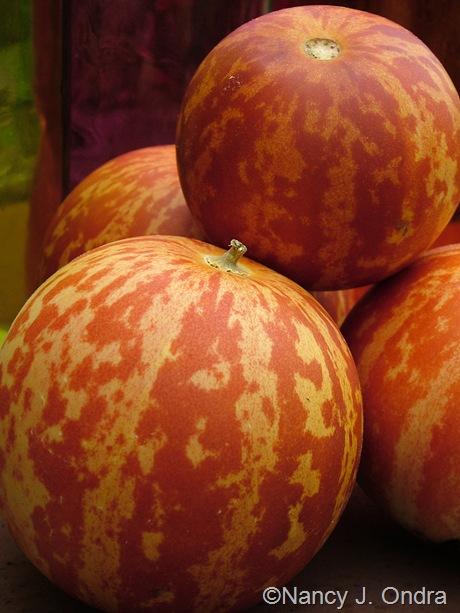 Melon 'Tigger' mid-August 2011