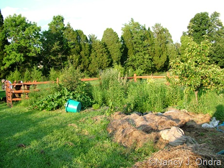 The Orchard at Hayefield July 30 10