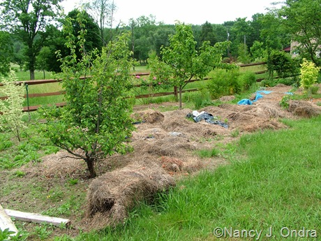 The Orchard at Hayefield June 6 10