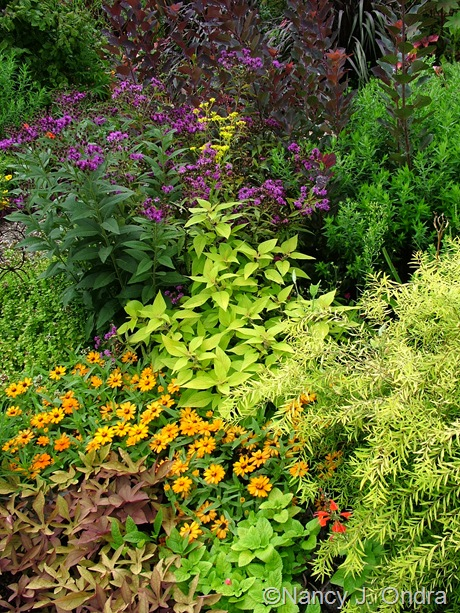 Salvia elegans 'Golden Delicious', Spiraea thunbergii 'Ogon' (Mellow Yellow), Salvia coccinea 'Lady in Red', Ipomoea batatas 'Sweet Caroline Bronze', Zinnia 'Profusion Orange', Vernonia, and Cotinus coggygria 'velvet Cloak' September 2011