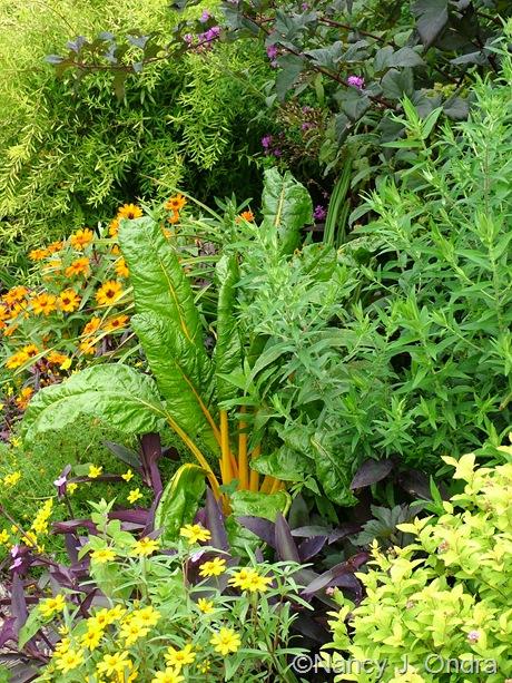 Beta 'Bright Lights', Spiraea x bumalda 'Monhub', Zinnia angustifolia, Setcreasea, Zinnia 'Profusion Orange', and Spiraea thunbergii 'Ogon' (Mellow Yellow') September 2011