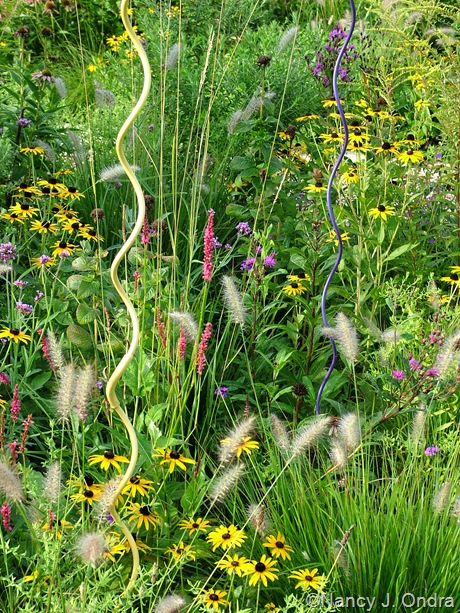Perennial meadow detail at Hayefield Aug 24 11