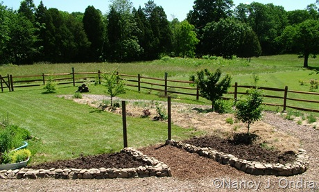 The Orchard at Hayefield June 13 06