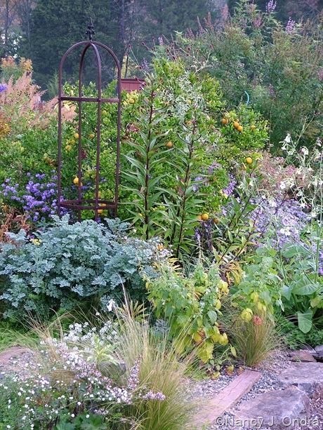 Side garden at Hayefield October 2011