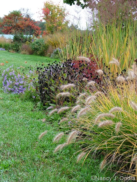 Long Border with Pennisetum alopecuroides 'Cassian' Rudbeckia fulgida, and Panicum virgatum 'Dallas Blues' October 2011
