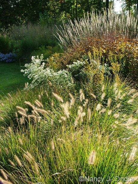 Pennisetum alopecuroides 'Cassian with Spodiopogon sibiricus Oct 2011