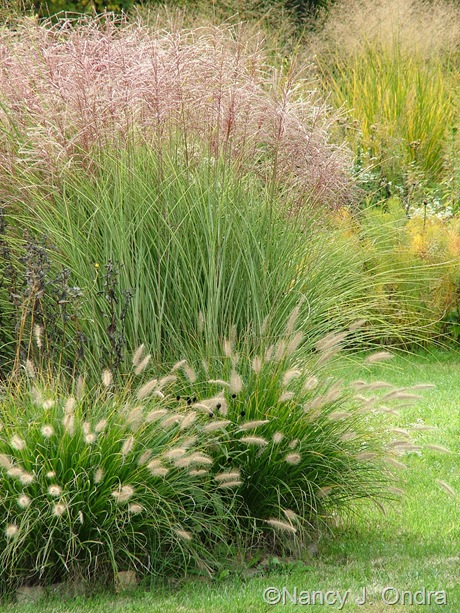 Miscanthus 'Morning Light' with Pennisetum alopecuroides 'Cassian' Oct 2011
