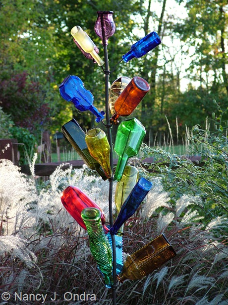 Bottle tree in the garden at Hayefield