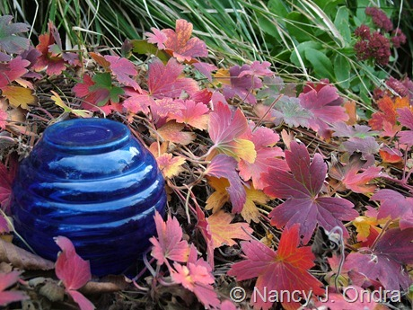 Blue glass with Geranium wlassovianum in fall color at Hayefield