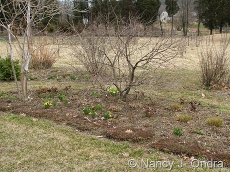 Shrubbery bed at Hayefield March 2012