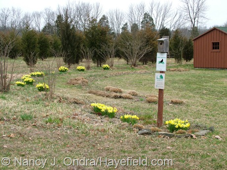 Arc Borders at Hayefield early April 2012