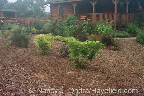 The Front Garden at Hayefield (July 2003)