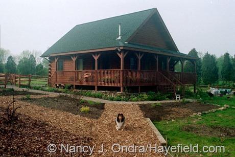 The Diagonal Path at Hayefield (Spring 2003)