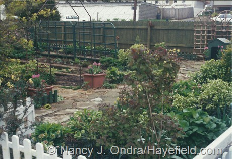 Green Street, Emmaus: My pre-Hayefield garden (April 2000)