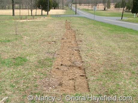 The Long Border at Hayefield (April 8, 2008)