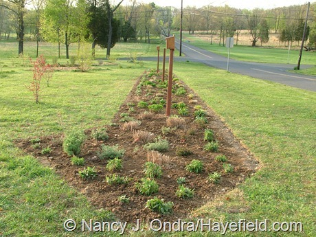 The Long Border at Hayefield (April 25, 2008)