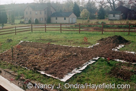 The Front Garden at Hayefield (Fall 2002)