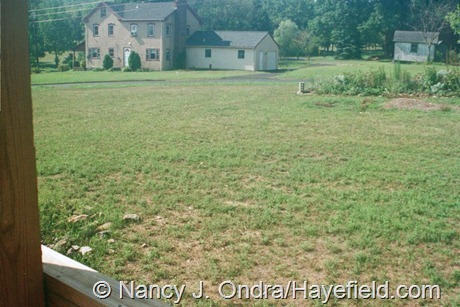 The Front Garden at Hayefield (Summer 2002)