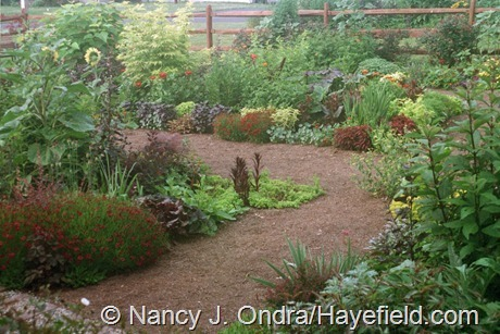 The Front Garden at Hayefield (Summer 2004)