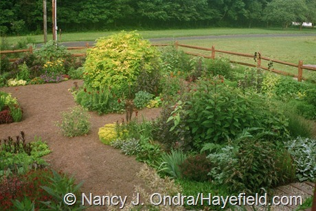 The Front Garden at Hayefield (Late Summer 2004)