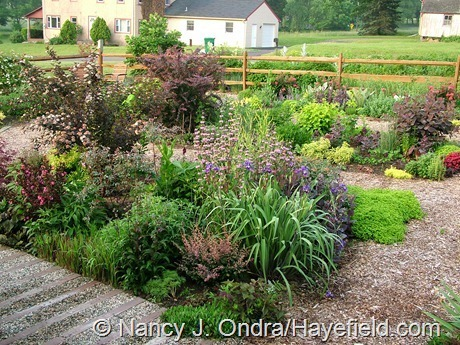 The Front Garden at Hayefield (Summer 2006)
