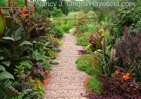 Front garden main path at Hayefield late August 2012
