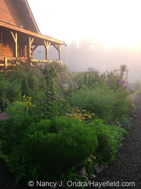 Side garden at Hayefield mid-August 2012