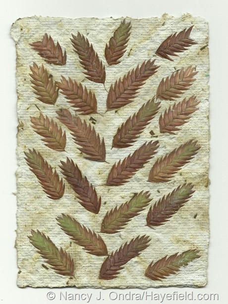Handmade paper with Chasmanthium latifolium seedheads