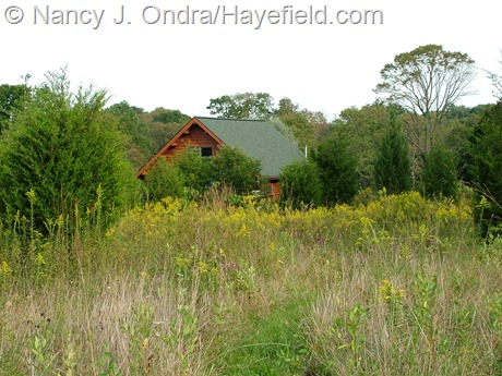 Upper meadow at Hayefield