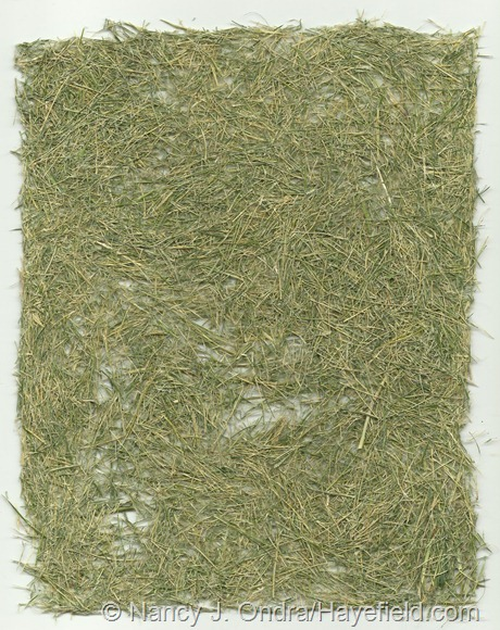 """Paper"" made from Hakonechloa macra 'Aureola' foliage (no pulp)"