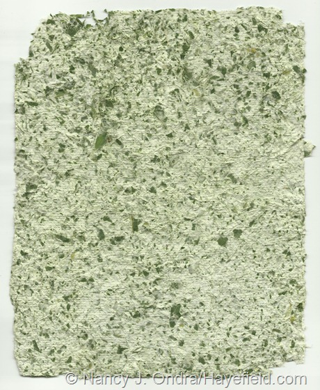 Paper pulp blended with Hosta fortunei foliage