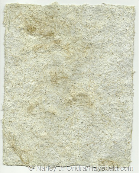 Paper pulp blended with Stipa tenuissima seeds