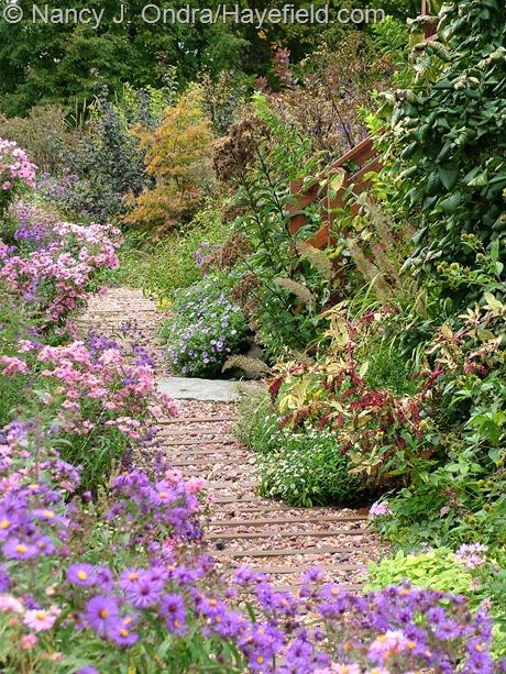 Side garden main path at Hayefield