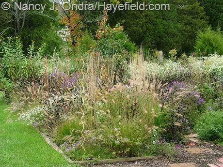 Perennial meadows at Hayefield
