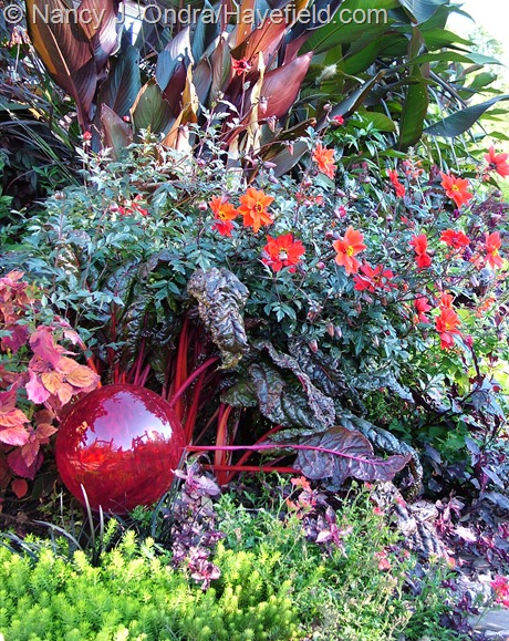 'Australia' canna, 'Bishop of Llandaff' dahlia, 'Bright Lights' Swiss chard, and 'Angelina' sedum (Sedum rupestre) at Hayefield