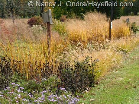 Long Border at Hayefield