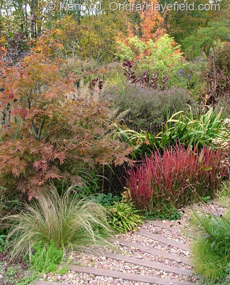 Japanese maple (Acer palmatum), Mexican feather grass (Stipa tenuissima), seersucker sedge (Carex plantaginea), Japanese blood grass (Imperata cylindrica 'Rubra'), 'Gerald Darby' iris (Iris x robusta), golden elderberry (Sambucus nigra 'Aurea'), and three-flowered maple (Acer triflorum) at Hayefield