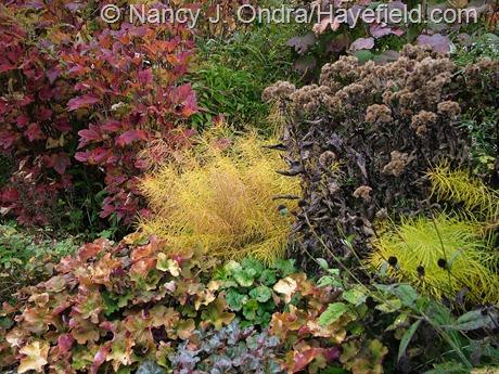Fall color at Hayefield