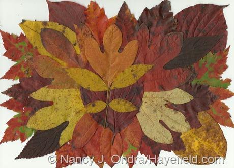 Fall Leaf Scan from Hayefield