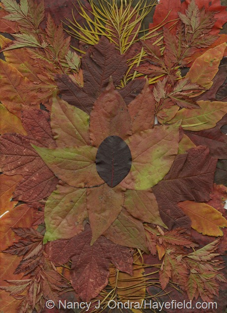 Fall Leaf Scan from Hayefield