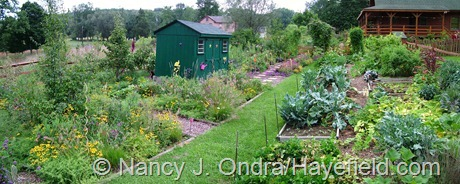 Cottage Garden Panorama at Hayefield August 2011
